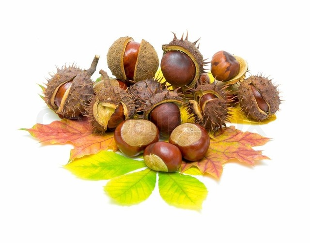 mature close up mature close white preview background autumn leaves chestnuts