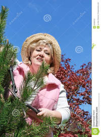 free mature picture porn womans mature woman gardening royalty free stock photography