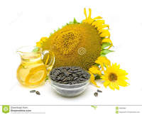 mature close up mature sunflower seeds oil flowers white close background horizontal photo stock