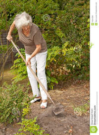 mature lady photos mature lady gardening royalty free stock