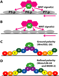 mature vulva pictures chapters vulvamorph fig
