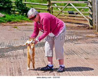 mature ginger zooms mature grey haired woman wearing pink cardigan sunglasses playing stock photo ginger cat