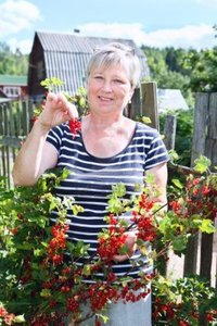 mature red antikainen mature adult woman garden brunch red currants berries photo