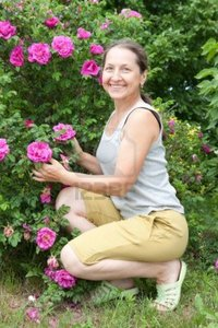 outdoor mature mature woman sitting outdoor near blossoming bush dogrose photo