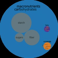 red mature nutrition foods circlechart beans kidney red mature seeds canned macronutrient micronutrient food composition weight circle chart
