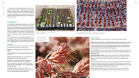 spreading mature spread sedums groundcover colorful low maintenance picks